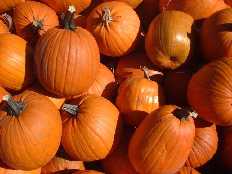 A display of pumpkins